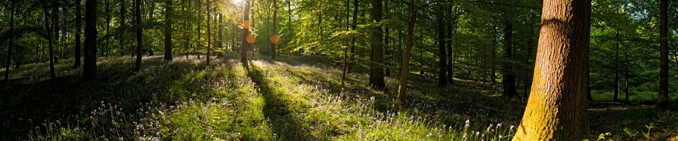 Påsken på Fyn 2014 - Orienteringsløb for hele familien  –  d.17-18 & 19 april.